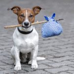 Finding the Perfect Fit for Rehomed Dogs
