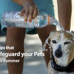 Four Tips that Safeguard your Pets This Summer