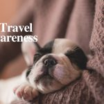 Pet Air Travel Awareness